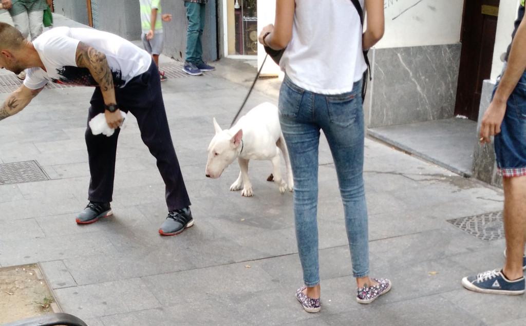 dogs in spain, dog poo, perros en espana, zaragoza, perros en zaragoza, saragossa, saragosa